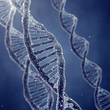 """Cause for pancreatic agenesis found in """"junk DNA"""". Image credit: University of Exeter"""