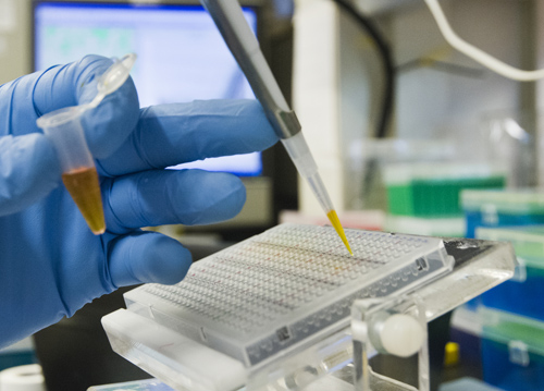 A laboratory procedure taking place in the diabetes research lab of Dr. Michael Schwartz. Image credit: Clare McLean