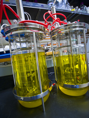 A dynamic metabolite regulatory system developed at JBEI could one day help boost production of an advanced biofuel, a therapeutic drug, or other valuable chemical products. (Photo by Roy Kaltschmidt)