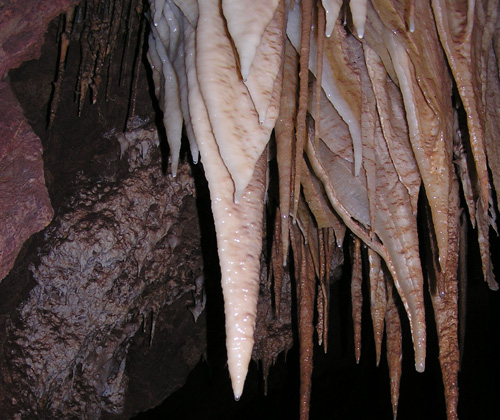 UA scientists have discovered diverse communities of bacteria, fungi and archaea on the surface of Kartchner stalactites that live off of nutrients from the cave drip water and contribute to the growth of the cave formations through calcite precipitation. (Photo by: Bob Casavant/Arizona State Park Service)