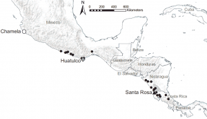 University of Michigan ecologist Elizabeth G. Pringle and her colleagues studied mutually beneficial interactions between Ecuador laurel trees and Azteca ants at 26 study sites in seasonally dry tropical forests along the Pacific coast of southern Mexico and Central America. The coastal sites span 1,426 miles, with annual precipitation increasing fourfold from the northernmost to the southernmost site. Additional work was conducted at three of the sites: Chamela, Huatulco and Santa Rosa. Image credit: Elizabeth G. Pringle (Click image to enlarge)
