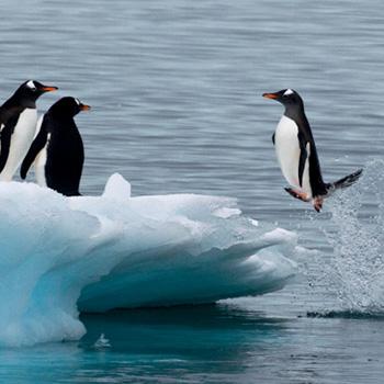 Pinguine in der Antarktis. Image credit: © Michael Poliza / WWF