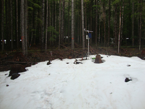 A mounted camera shows snow sticking in an open area, while it appears to have melted under the trees in dense, second-growth forest just behind. Image credit: University of Washington