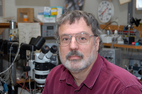 """Andrew McClellan. McClellan discovered how the sea lamprey, an eel-like fish, regrows the neurons that comprise the long nerve """"highways"""" that link the brain to the spinal cord. Image credit: University of Missouri"""