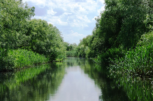A channel on the Danube River delta. (Photo courtesy of Florin Filip, FAD Smart Technology SRL)