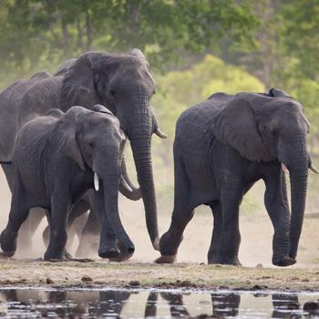 Elefanten in Zimbabwe. Image credit: © Michael Poliza / WWF