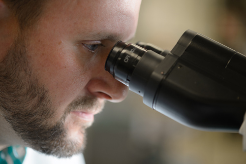 MSU's Mark Aupperlee, a postdoctoral researcher, reviews a breast cancer tumor under a microscope. Photo by G.L. Kohuth