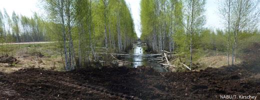 Werden Moore zerstört, entweichen große Mengen Treibhausgas. Image credit: NABU.de