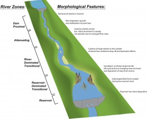 Conceptual model of how two dams in a sequence may interact. Image credit: USGS (Click image to enlarge)
