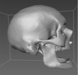 Cranium image reconstructed from CT scans. Image credit: North Carolina State University