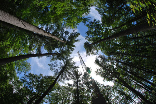 What color is your canopy? An automated camera on a tower above the forest canopy can record seasonal changes in overall leaf color, but photos might not always correspond to seasonal biochemical changes within leaves themselves. Image credit: Marc Mayes/Brown University