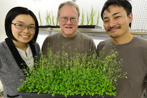 Jeongmin Choi, Gary Stacey and postdoctoral fellow Kiwamu Tanaka recently discovered the first plant receptor for extracellular ATP. Image credit: Roger Meissen/Bond LSC