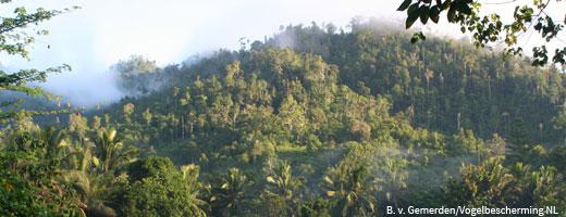 In Gorontalo gibt es einen der artenreichsten Wälder der Erde. Image cedit: NABU.de