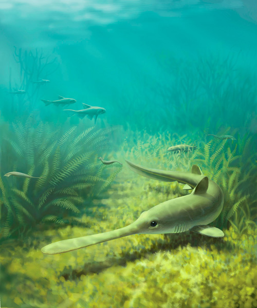 An artist's rendering of Bandringa, a 310 million-year-old shark originally found in fossil deposits from Mazon Creek, Illinois. University of Michigan paleontologist Lauren Sallan and a colleague say this bottom-feeding predator migrated to the ocean to spawn in shallow coastal waters and left behind fossil evidence of one of the earliest known shark nurseries. Painting by John Megahan, University of Michigan.