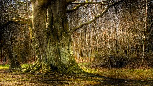 Alte Bäume sind bessere Kohlenstoffspeicher. Image credit: Guyon Morée (Source: Flickr)
