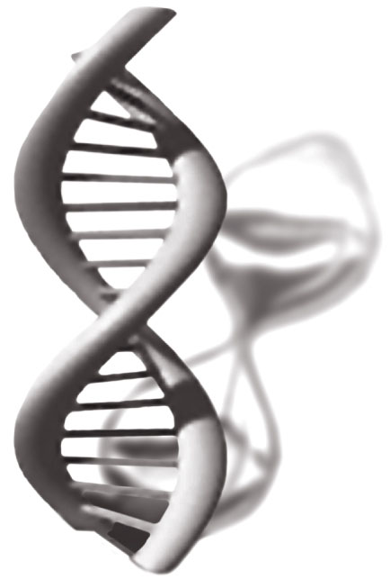 The biology of aging. The ability of parasitic strands of DNA to proliferate in tissues increases with age. Whether this is a cause of health problems or an association remains unclear. Image credit: Sedivy lab/Brown University