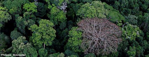 Es braucht Hunderte von Jahren bis ein Regenwald gewachsen ist. Image credit: NABU.de