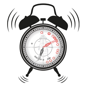 The image shows an alarm clock, symbolizing the circadian clock. The pointers of the clock are formed by scolopidia, i.e. those mechanosensory units that provide information to the fly's circadian clock. The red pointer shows the mean circadian time after flies were vibrated. The other pointer is grey and depicts the circadian time without vibration. Image credit: Faxen/Albert, UCL