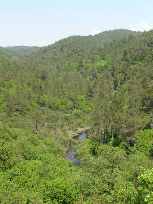 Landschaftsaufnahme Dadia National Park. Image copyright: Konstantina Zografou