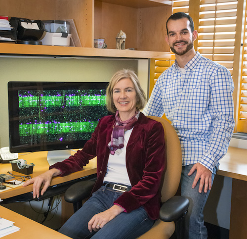 Jennifer Doudna and Samuel Sternberg used a combination of single-molecule imaging and bulk biochemical experiments to show how the RNA-guided Cas9 enzyme is able to locate specific 20-base-pair target sequences within genomes that are millions to billions of base pairs long. (Photo by Roy Kaltschmdit)