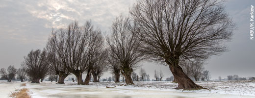 In Zukunft sollen sich Tiere und Pflanzen an der Havel wieder frei entwickeln können. Image credit: NABU.de