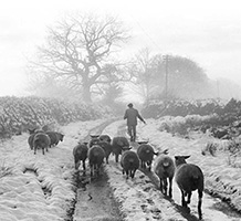 Front bookcover: 'The Seasons: An Elegy for the Passing of the Year'. Image credit: University of Exeter