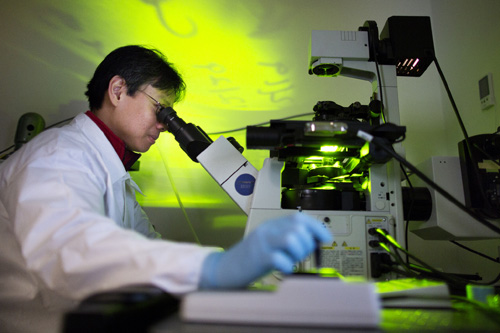 Yen Kong, BME Research Fellow, checks for colonies of beating heart muscle cells. Image credit: Joseph Xu, Michigan Engineering Communications & Marketing