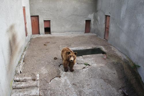 Im Kormisosh-Auswilderungs-gehege in Bulgarien werden auch heute noch Bären gehalten. Image credit:© Aleksandar Dutsov, Balkani Wildlife Society.