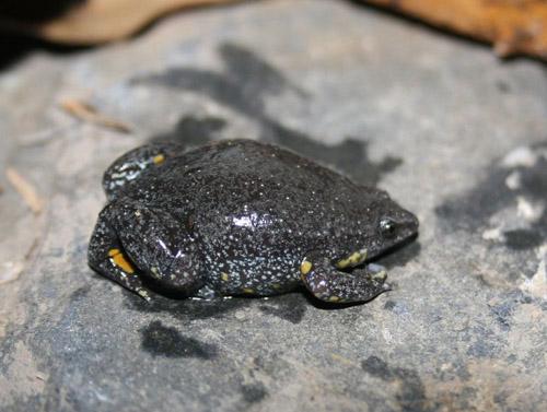 """Der neue Frosch """"Camilo"""". Image credit: WWF.de"""