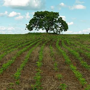 Ein Sojafeld in Brasilien. Image credit: © Peter Caton / WWF