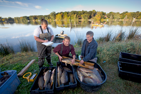 Researchers (l to r) Justine Koch, Reid Swanson, and Peter Sorensen measure a common carp on the shore of Keller Lake. That day they removed a pickup truckful of the fish. Image credit: University of Minnesota