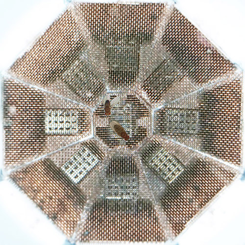 To capture the male fruit fly's mating song, the researchers constructed an octagonal chamber covered in copper mesh and fitted with nine high-fidelity microphones (above). The researchers then placed a sexually mature male and female in the chamber and recorded more than 100,000 song bouts. (Photo courtesy of Philip Coen, Princeton Neuroscience Institute)
