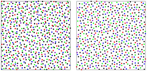 Unlike chickens, visual cells are evenly distributed in an obvious pattern in many creatures' eyes. The Washington University researchers thought the unusual arrangement in chickens (left) had to do with how the cones are packed into their small, thin retina. The Princeton researchers developed a computer-simulation model that mimicked the final arrangement of chicken cones (right). The colored dots represent the centers of the chicken's eye cells. They are enlarged and colored for visualization purposes. (Image courtesy of Salvatore Torquato, Princeton University)