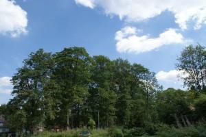 Von Pflanzen emittierte Kohlenwasserstoffe tragen zur Wolkenbildung bei