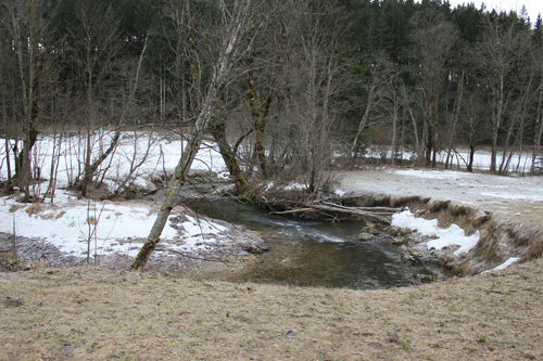 Uferböschung entlang des Lassingbaches (Niederösterreich) 2013. In der rechten Bildhälfte ist die durch das Fehlen von stabilisierender Gehölzvegetation bedingte starke Ufererosion zu erkennen. (Image copyright: D. Frankl)