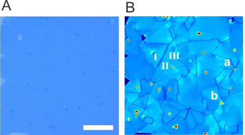 (A) Optical image of a large area of monolayer MoS2 and (B) an SHG image of the same area revealing grains and grain boundaries where translational symmetry is broken to form 1D edge states. Image credit: Berkeley Lab