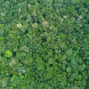 Ein großer Erfolg für den Schutz des Regenwaldes in Brasilien. Image credit: © Roberto Maldonado / WWF
