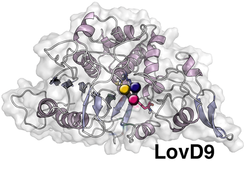 A representation of the chemical structure of the mutated enzyme LovD9 used to manufacture the cholesterol-reducing drug simvastatin. The structure of the mutated enzyme and why it is effective in producing simvastatin was determined through X-ray crystallography and molecular dynamics simulations at UCLA. Image credit: UCLA/Codexis