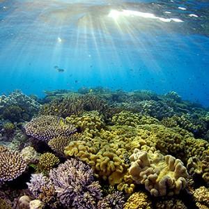 Great Barrier Reef. Image credit: © Troy Mayne / WWF Australien