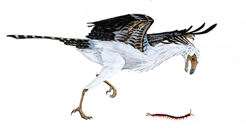 Jeholornis, an early bird, lived during the early Cretaceous period approximately 120 million years ago. The evolution of Jeholornis and other Cretaceous birds is the subject of a new paper published in the Proceedings of the Royal Society B. Image courtesy of Allison Elaine Johnson