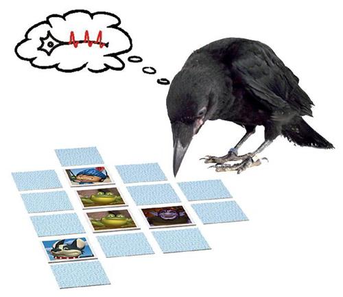 """Bei Krähen, die eine Art """"Memory"""" spielten, sind Gedächtniszellen während der Erinnerungsphase aktiv und halten dadurch die Information über das passende Bild im Arbeitsspeicher, bis die Krähe schließlich die richtige Auswahl treffen kann. Abbildung credit: LS Tierphysiologie"""