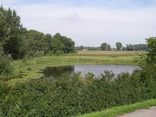 Einziges Vorkommen einer Wildpopulation der Weißen Seerose in Hessen: Naturschutzgebiet Bruderlöcher bei Riedstadt-Erfelden. Image credit: © Senckenberg