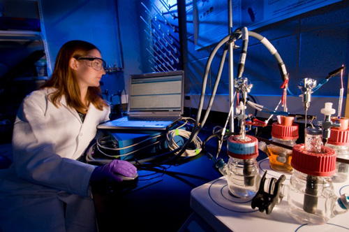 Allison Speers, MSU graduate student, works on a fuel cell that can eliminate biodiesel producers' hazardous wastes and dependence on fossil fuels. Photo by Kurt Stepnitz