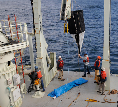 To conduct their work, the scientists collected water samples at different depths of the ocean during two cruises from the relatively nutrient-rich waters off Woods Hole to the phosphorus-starved subtropical Sargasso Sea near Bermuda in 2008 and 2012. Pictured here are corresponding author WHOI Associate Scientist Benjamin Van Mooy (orange helmet) and research assistant Justin Ossolinski (blue helmet) working with crew members of the R/V Knorr to deploy a sediment net-trap used in the study. (Photo by Suni Shah, Woods Hole Oceanographic Institution)