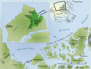 This map and the inset show the location of Banks Island and Aulavik National Park, which ajoins the western Artic Ocean. Jaelyn Eberle of the University of Colorado, Boulder, has led multiple expeditions into the region, where she has recovered abundant fossil sharks teeth from a coastal site in the park. Image courtesy of Jaelyn Eberle (Click image to enlarge)