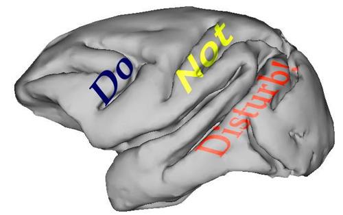 Nervenzellen aus zwei für das Arbeitsgedächtnis wichtigen Hirnarealen verwenden verschiedene Strategien zur Ausblendung von Störreizen. Abbildung credit: LS Tierphysiologie