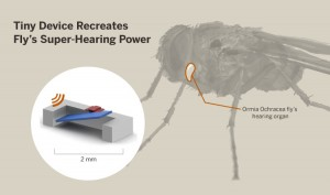 Cockrell School engineers developed a tiny, low-power device that mimics a fly's super-evolved hearing mechanism. The device could be used to build a new class of hypersensitive hearing aids. Image credit: The University of Texas at Austin (Click image to enlarge)