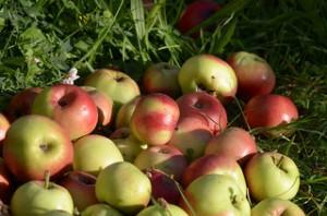 Stammen diese Äpfel aus Tirol? Mit neuen Methoden kann das sehr einfach festgestellt werden. Image credit: Michael Hamann (Source: Flickr)