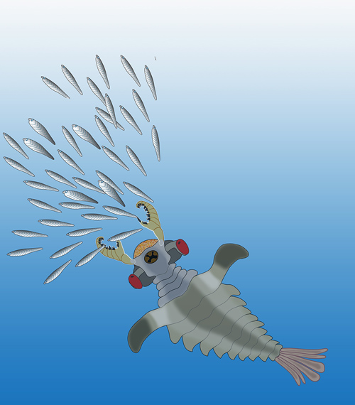 Artist's impression of Lyararapax, one of the species of the world's first predators, the anomalocaridids, chasing its possible prey, primitive fishes that also existed in the Lower Cambrian. (Illustration by Nicholas Strausfeld/University of Arizona)