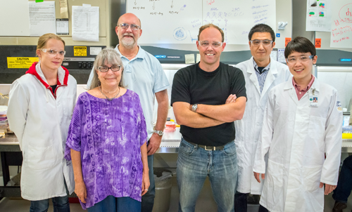 The Berkeley Lab team behind the latest insights into why older women are more susceptible to breast cancer. From left to right: Tiina Jokela, Martha Stampfer, Jim Garbe, Mark LaBarge, Masaru Miyano, and ChunHan Lin (Fanny Pelissier not pictured). Image credit: Berkeley Lab